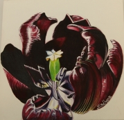 Tulipfront